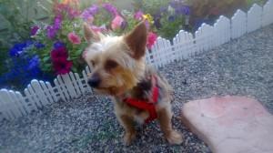 Henry the killer dog